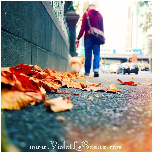 15 Melbourne Snapshots Changing Seasons  My Week In Snapshots