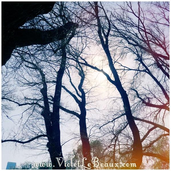 1230825 Changing Seasons  My Week In Snapshots