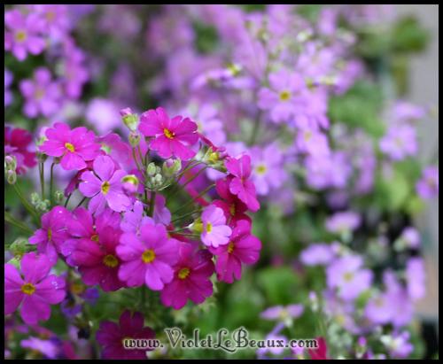 VioletLeBeaux-Melbourne-894_21205