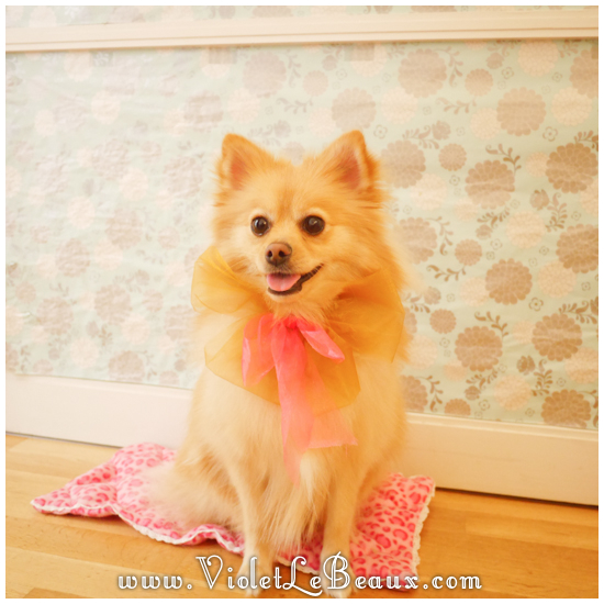 20 diy dog mattress How To Make A Puppy Mattress   Lotties Home Sweet Home