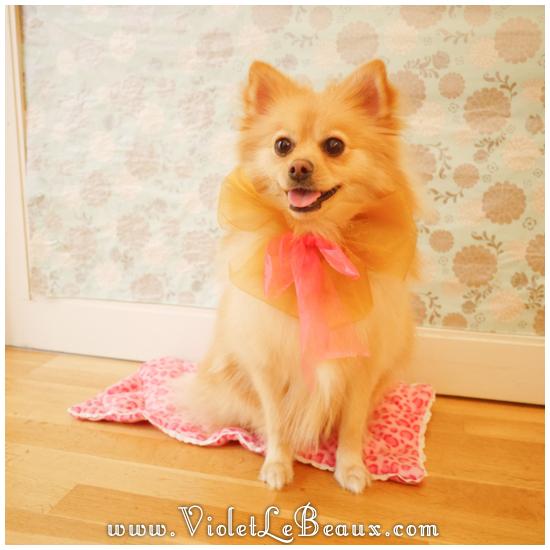 21 diy dog mattress How To Make A Puppy Mattress   Lotties Home Sweet Home