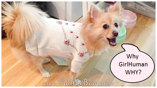 easy-puppy-sweater5465