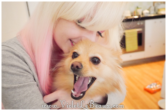 cute-1-year-old-pomeranian016