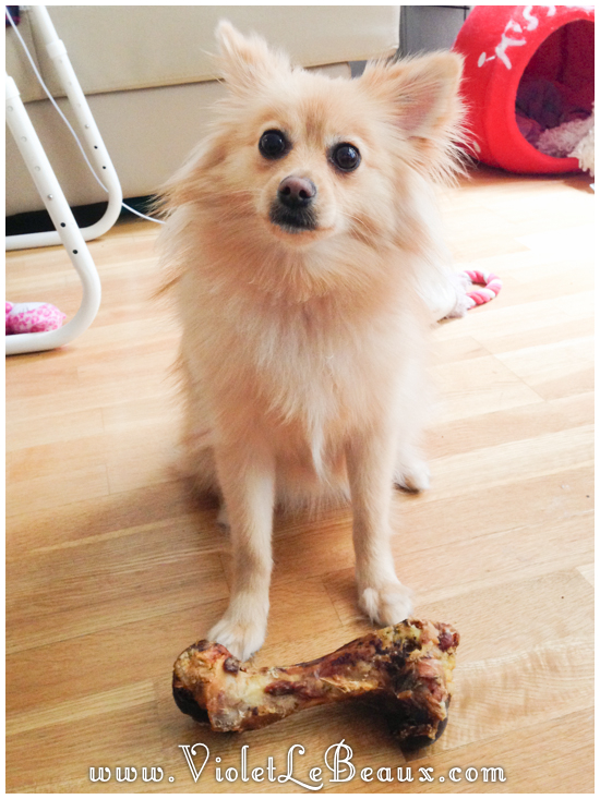 cute-1-year-old-pomeranian0625