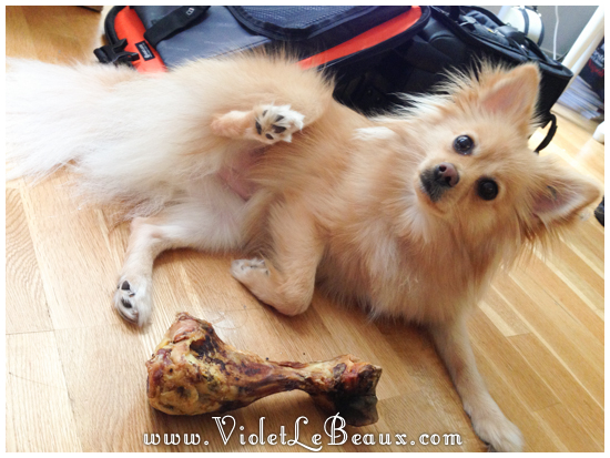 cute-1-year-old-pomeranian0629