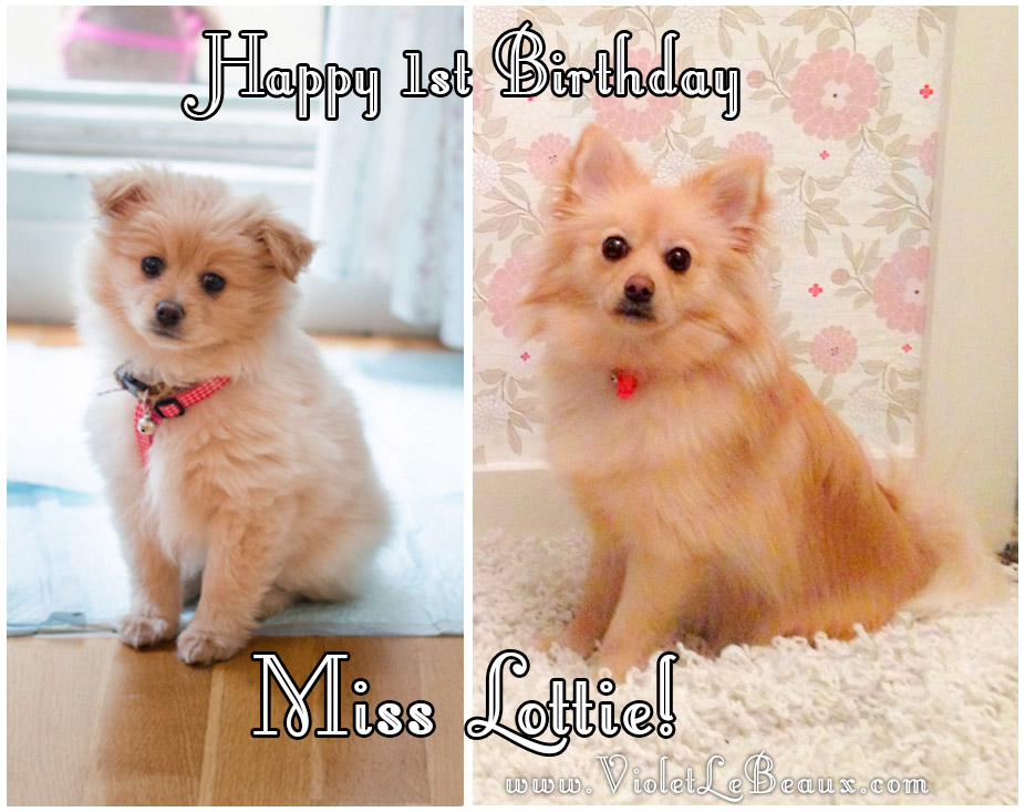 cute-1-year-old-pomeranian9555 copy2