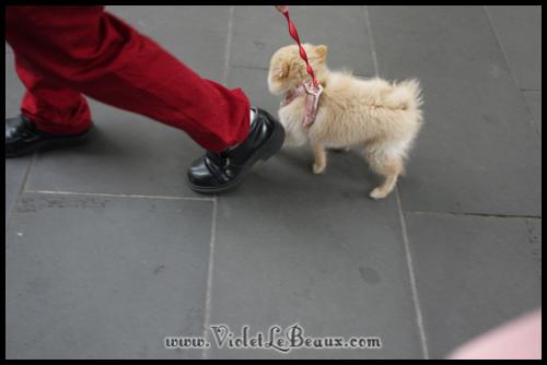 Cute-Pomeranian675