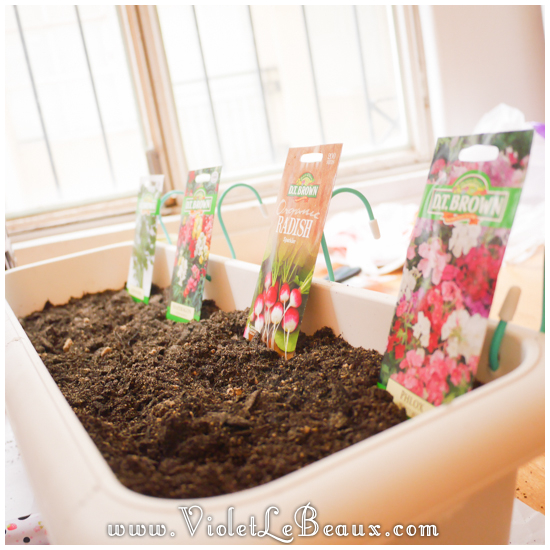 Diy-Window-Box20821