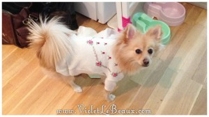 easy-puppy-sweater5464
