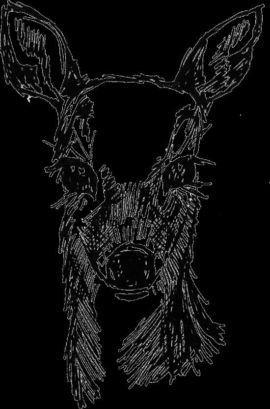 Woodland-Sketch_0003_Fawn